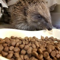 Premium Complete Hedgehog Food